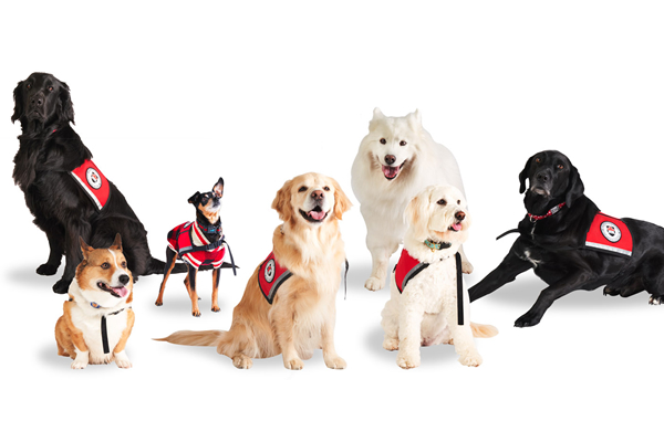 Members of the Carleton Therapy dog team.